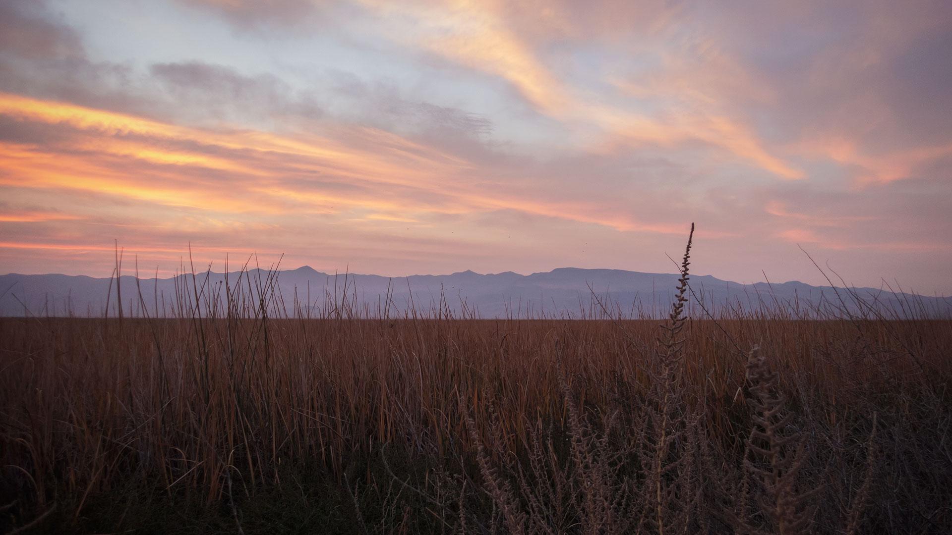 High desert of Nevada at sunrise
